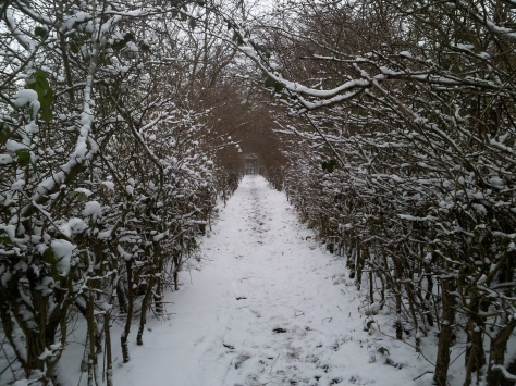 I love running through this tree tunnel, it was all the better in the snow