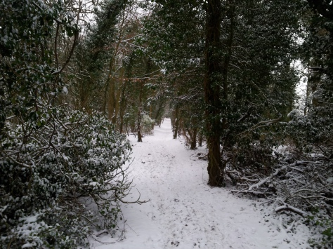 A view of the North Downs Way covered in snow
