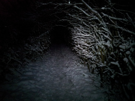 A view of the tree tunnel from Saturday at night, illuminated by the Silva Trailrunner Plus