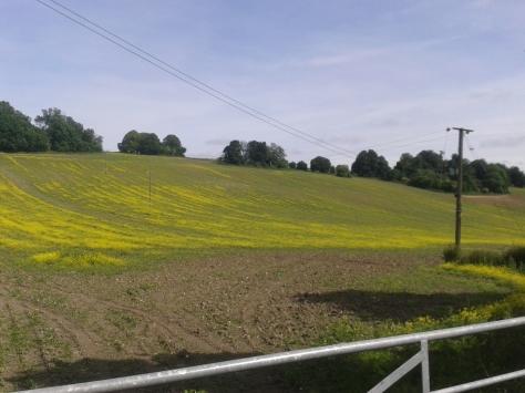 North Downs Way near Woldingham School