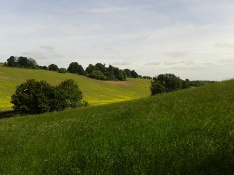 I love the rolling fields