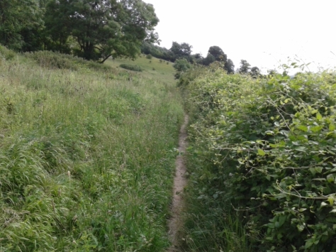 Heading towards the Oxted Downs along a narrow uneven path