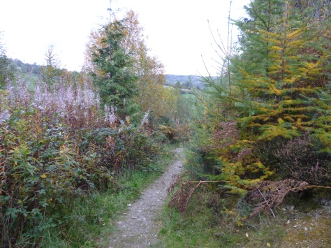Quite nice paths to walk along